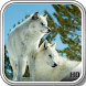 White Wolf Pack 3 Wallpaper by LegendaryApps