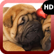 Shar Pei Wallpaper by MaxImages