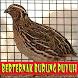 Cara Berternak Burung Puyuh by GoReading