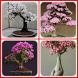 Bonsai Plant Design Ideas by juraganandroid