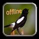 Kicau 5 Jenis Burung Kacer by Jamur Berkah
