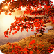 Autumn HD Live Wallpaper by FunGames10