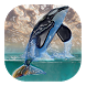 Whale live wallpaper