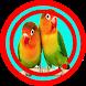 Memancing Lovebird Lepas Dari Kandang by Omasuhu