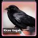 Kicau Suara Burung Gagak by kangdeveloperstudio