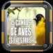 15 Cantos de aves silvestres do brazil by Goedang_Music.App