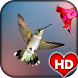 Humming Bird Wallpaper HD by Ash Tech Apps