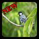 Suara Burung Gelatik Batu New Offline by Topek App