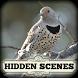 Hidden Scenes - Winter Birding