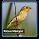 Kicau Suara Burung Manyar by kangdeveloperstudio