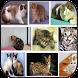 Informasi Jenis Kucing by NAYNAD_2015