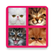 2048 Cute Cats by Seedling Corp