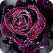 Rose Live Wallpaper by GlobalWallpapers