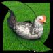 Chicken Live Wallpaper by Carter Wallpaper