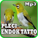 Masteran Pleci Endok Tatto Mp3