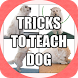 How to Teach or Train Your Dog by mancapp