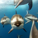 Dolphins Live Wallpaper by Video Wallpapers