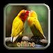Kicau Lovebird Ngekek Panjang by Jamur Berkah