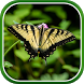 Macro Butterfly Live Wallpaper by Live Wallpapers 3D