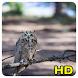 Owl Wallpaper by Queru HD app