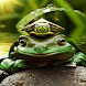 Green Frog Live Wallpaper by Daksh Apps