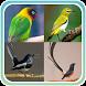 Kicau Master Burung Juara by Kicau Dev