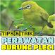 Tips & Trik Perawatan Burung Pleci by Padepokan Cirebon-Banten