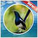 Ocehan Burung Kacer Terbaik by PerothaDev
