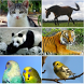 Animal sounds and ringtones by ADRIL apps