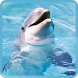 Dolphins Live Wallpapers by siranee