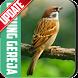 Masteran Kicau Burung Gereja by EdukaPlay
