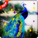 Peacock Live Wallpaper by AdSoftech
