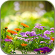 Flowers Live Wallpaper by Forever WallPapers