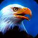 Bald Eagle. Wildlife Wallpaper