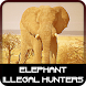 Elephant Illegal Hunters by Winter Tales