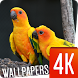 Birds Wallpapers 4K by Ultra Wallpapers