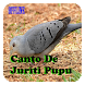 Juriti Pupu Canto Offline by dwelapps