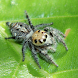 Spider Watch by Earthwatch Institute India