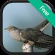 Cuckoo Bird Sounds by Rinrada Pimweingkham