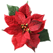 Christmas flower LWP