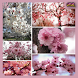 Cherry Blossom by Arroya Apps