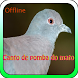 Canto De Pomba Do Mato by prastowo sukses