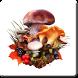 The Mushroom Navigator by AdInfinitum