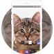 Theme for Videocon V1414 Cat Wallpaper by Theme master