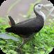 Suara Burung Ruak Ruak by Mhmapp Studio