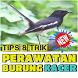 Tips & Trik Perawatan Burung kacer by Padepokan Cirebon-Banten