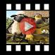 Shaun The Sheep Videos Collection