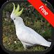 Cockatoo Bird Sounds by RinradaDev