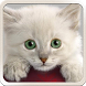 Cute Cat Wallpapers by Wallpapers Applications