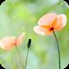 Spring Flower Live Wallpaper by DynamicArt Creator